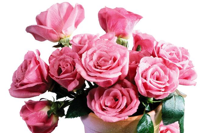 розы (700x438, 116Kb)