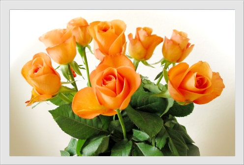 carte_rose0052 (496x336, 79Kb)