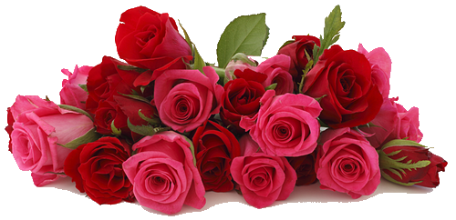 64072037_Rose_background_2 (500x242, 229Kb)