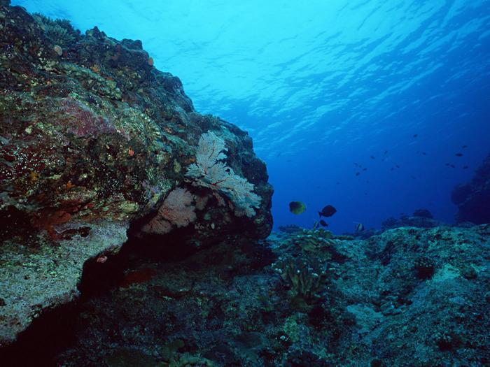 Концентрация кислорода, по словам биологов, как в глубинных морских...