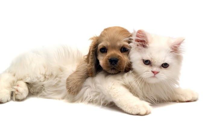 1319271402_Animals_Cats_Cat_and_dog_030580_ (700x438, 37Kb)