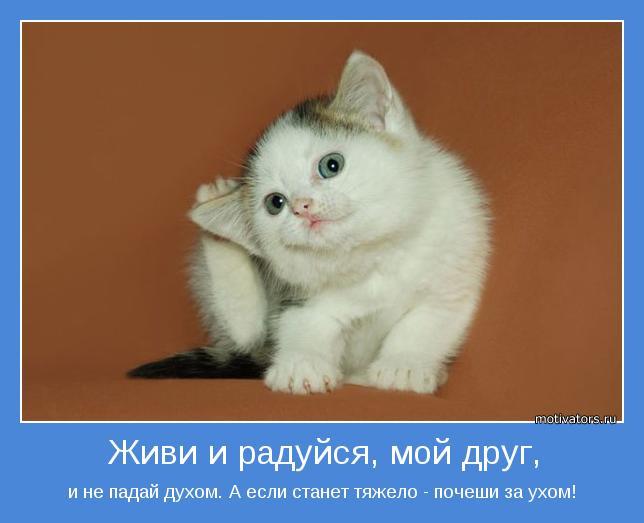 позитивные мотиваторы/3185107_kotenok_2222 (644x523, 29Kb)