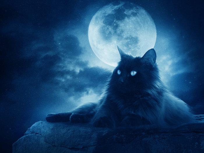 черный кот картинки/4171694_chernii_kot (700x526, 60Kb)