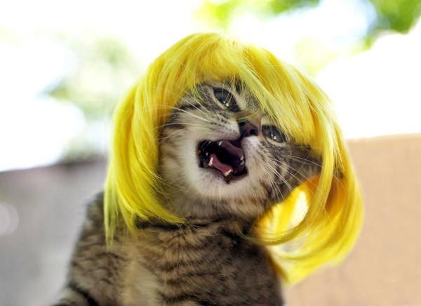 кошки в париках (600x436, 49Kb)