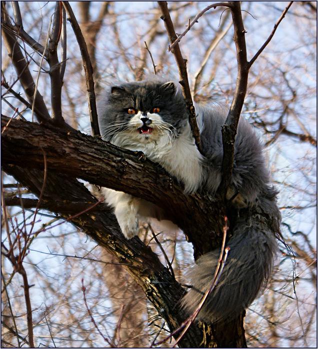 У кошки фото абсцесс кожи у кошки