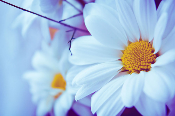 Картинки милые цветы
