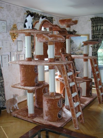 Пирамиде домик для кошки своими рукaми чертеж и рaзмеры атмосферы - демотиваторы де хеа