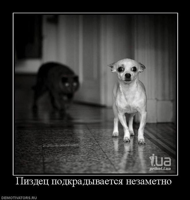 291604_pizdets-podkradyivaetsya-nezametno (663x700, 42Kb)