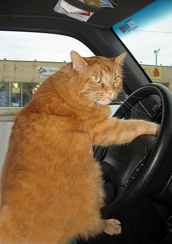 Кошки в стрессовых ситуациях