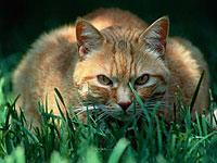 Кошки кушают