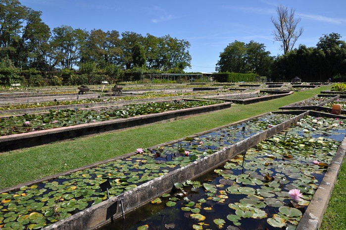 Есть в графском парке тихий пруд..... Там лилии цветут . .Ботанический сад Latour - Marliac. 75716