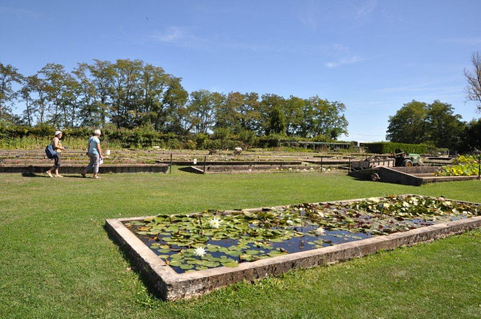 Есть в графском парке тихий пруд..... Там лилии цветут . .Ботанический сад Latour - Marliac. 81014