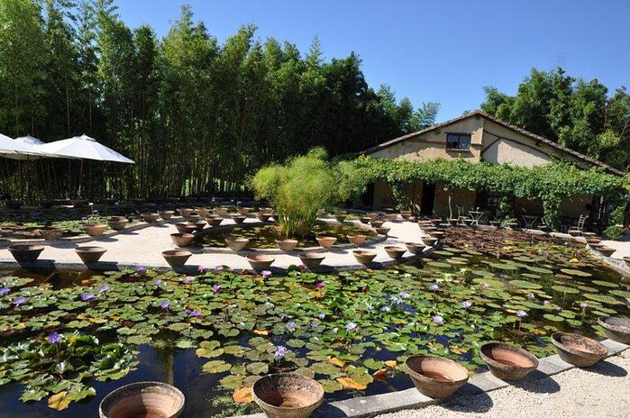 Есть в графском парке тихий пруд..... Там лилии цветут . .Ботанический сад Latour - Marliac. 78838