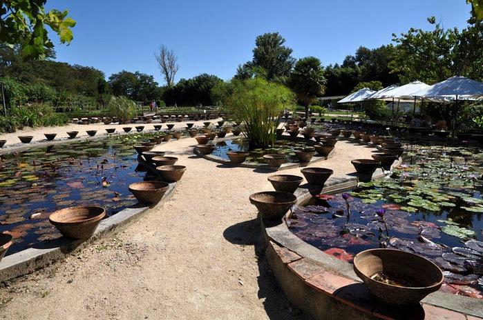 Есть в графском парке тихий пруд..... Там лилии цветут . .Ботанический сад Latour - Marliac. 72161