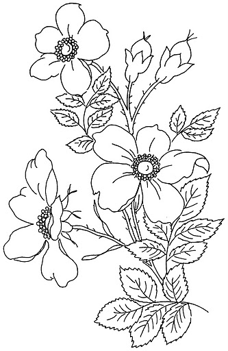 1000+ Images About Pyrography On Pinterest | Urban Threads Coloring Pages And Embroidery Designs