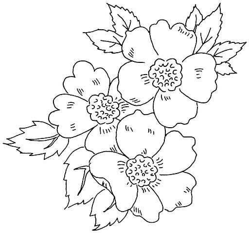 Цветок. рисунок для вышивки 662