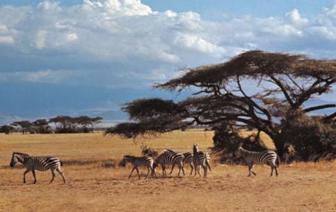 photo-serengeti_national_park-1 (483x305, 43Kb)