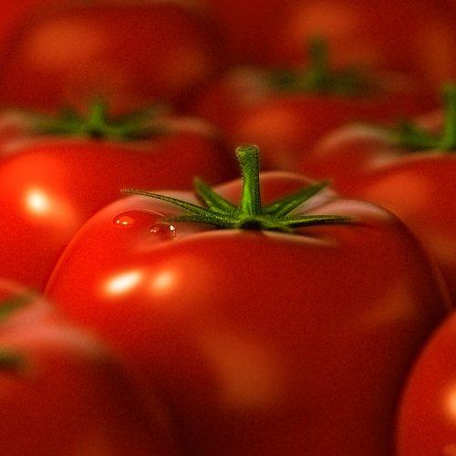 1220520787_tomato_dof (500x500, 30Kb)