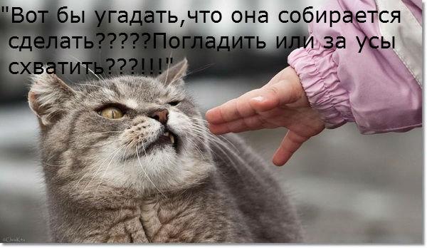 4234904_24 (600x348, 48Kb)