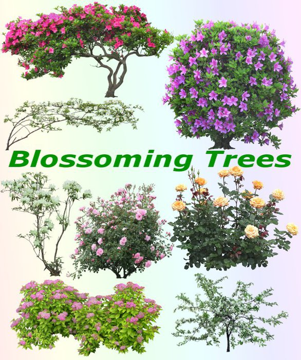 3291761_01Blossoming_Trees (586x700, 136Kb)