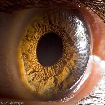 eye03 (450x450, 91Kb)