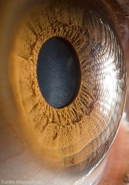 eye07 (450x644, 123Kb)