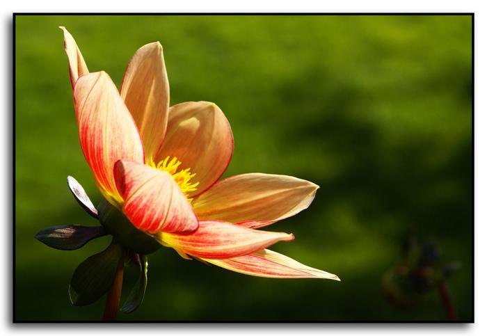 Осенний цветок (700x483, 125Kb)