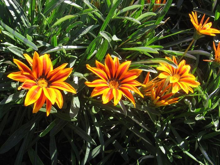 фото осень 2011 29 10 144 (700x525, 180Kb)