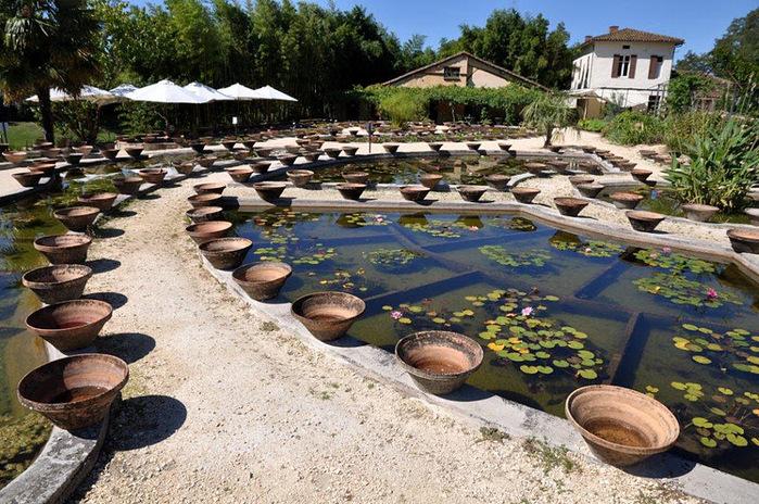 Есть в графском парке тихий пруд..... Там лилии цветут . .Ботанический сад Latour - Marliac. 29731
