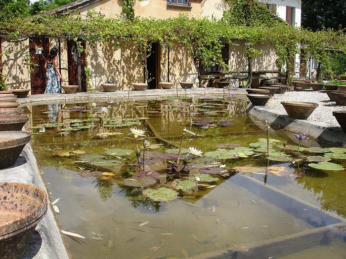 Есть в графском парке тихий пруд..... Там лилии цветут . .Ботанический сад Latour - Marliac. 35644