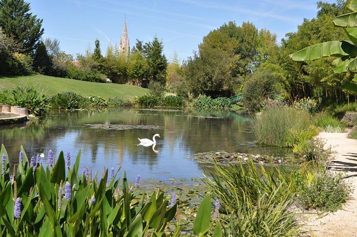 Есть в графском парке тихий пруд..... Там лилии цветут . .Ботанический сад Latour - Marliac. 56793