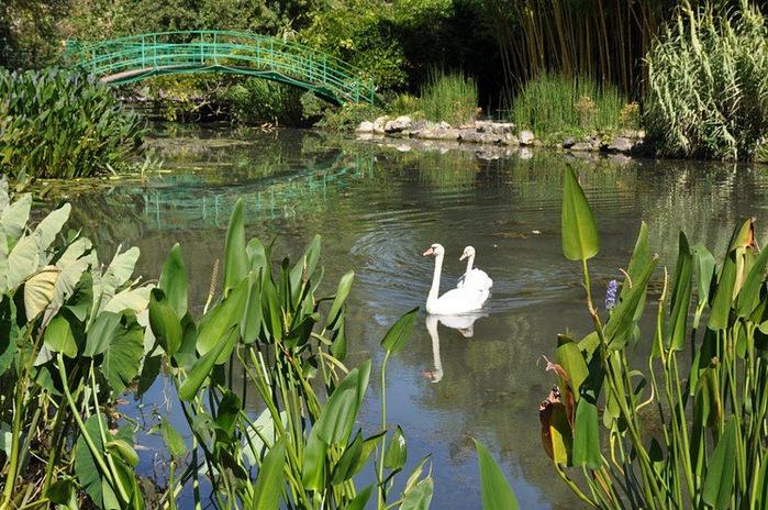 Есть в графском парке тихий пруд..... Там лилии цветут . .Ботанический сад Latour - Marliac. 40361