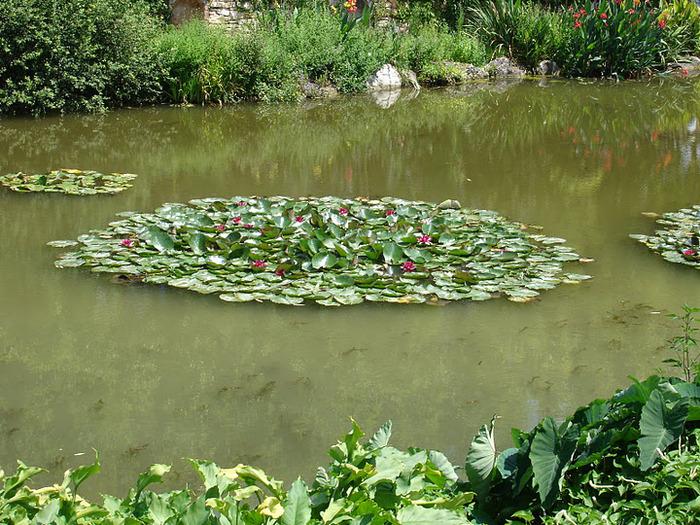 Есть в графском парке тихий пруд..... Там лилии цветут . .Ботанический сад Latour - Marliac. 24659