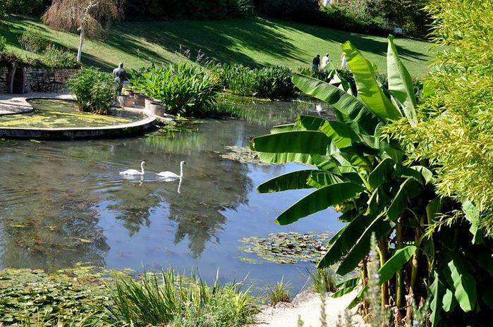Есть в графском парке тихий пруд..... Там лилии цветут . .Ботанический сад Latour - Marliac. 80689