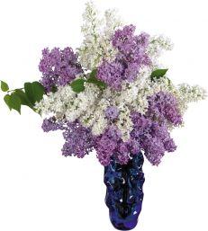 cvetochnyj-aromat-i-znaki-zodiaka (231x257, 12Kb)