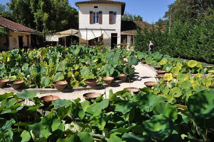 Есть в графском парке тихий пруд..... Там лилии цветут . .Ботанический сад Latour - Marliac. 85530