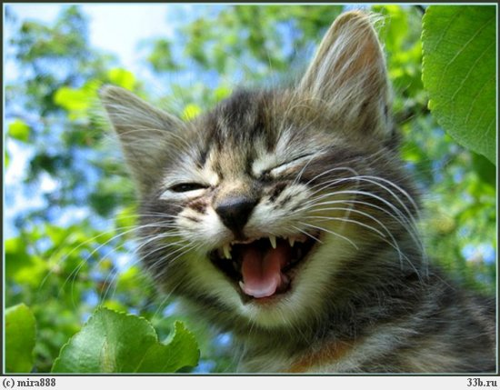 Картинка кот смеётся