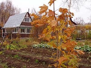 осень на даче (300x225, 59Kb)