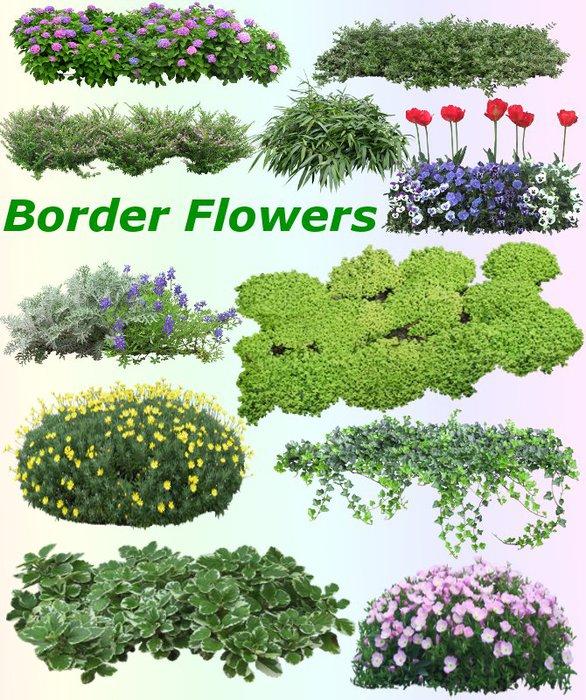 3291761_01Border_Flowers (586x700, 143Kb)