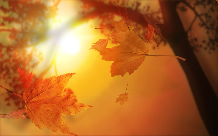 4240836_Nature_Seasons_Autumn_Autumn_Sun_025912_ (700x437, 60Kb)