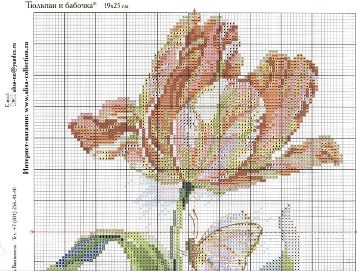 2-14 1 Тюльпан и бабочка (700x530, 339Kb)