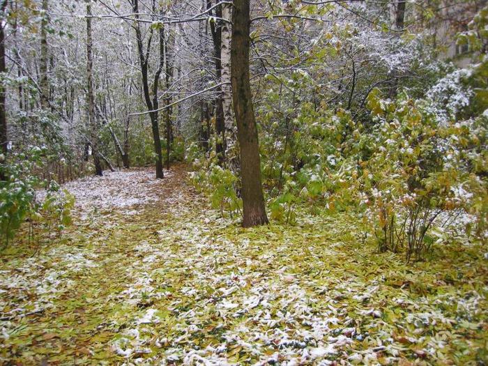 Ноябрь - Фото 43 - Пословицы и загадки про осень - Природа - Фотосайт