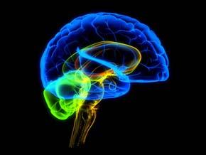 Мозг, brain