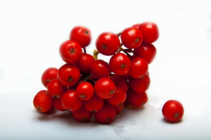Сочные рябиновые ягоды фото. Картинка 6024