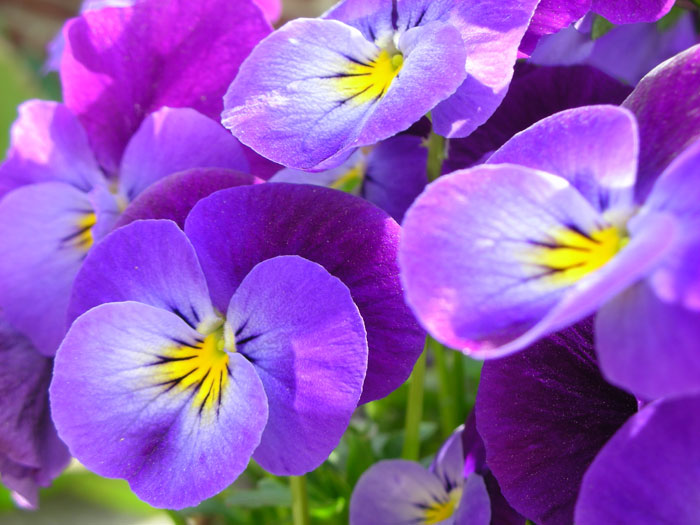 flowers004 (700x525, 80Kb)