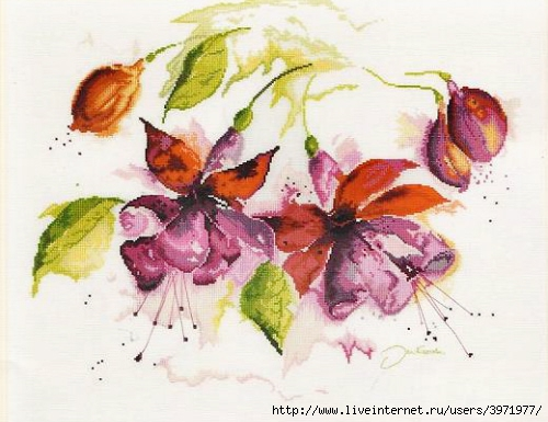 3971977_Fuchsia_in_Watercolour (500x385, 145Kb) .