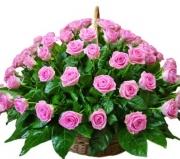 доставка цветов по городу (180x159, 33Kb)