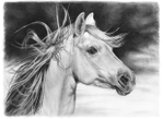 ������ horse1ua (700x512, 204Kb)