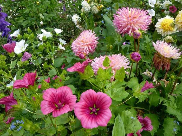 Сады поместья Эриньяк /Les Jardins du Manoir D'Eyrignac 93219