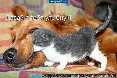 котенок с собачкой (500x333, 60Kb)